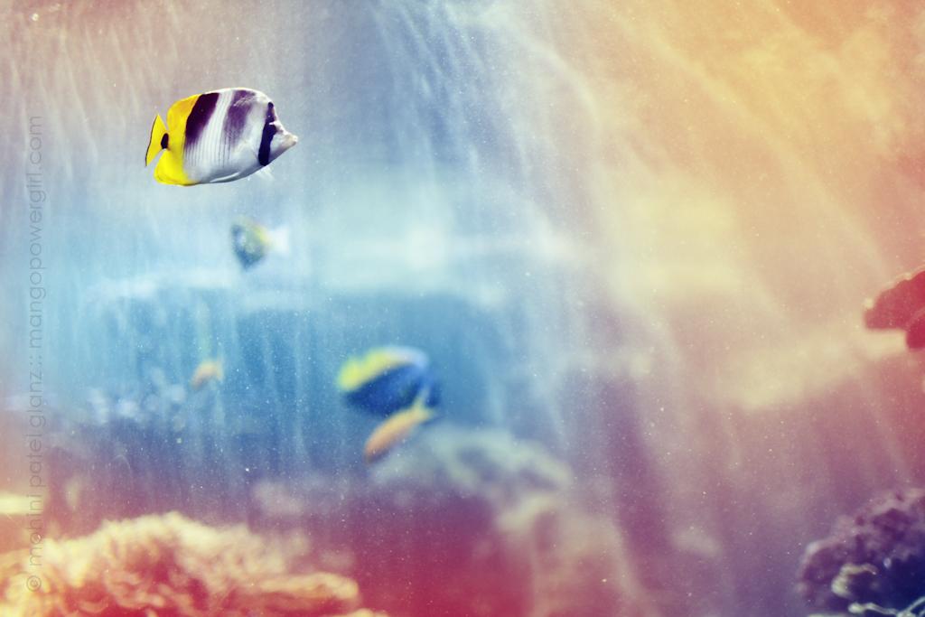 waikiki aquarium - 5