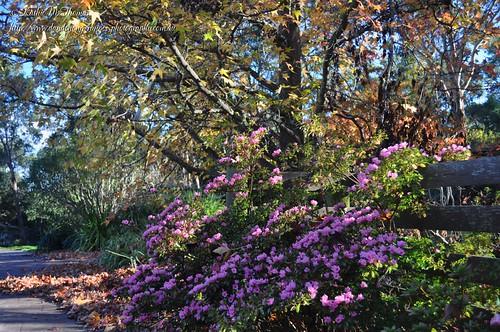 Entry to our garden
