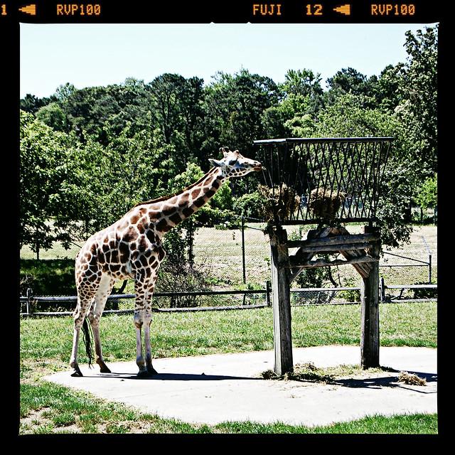 Zoo0712 003