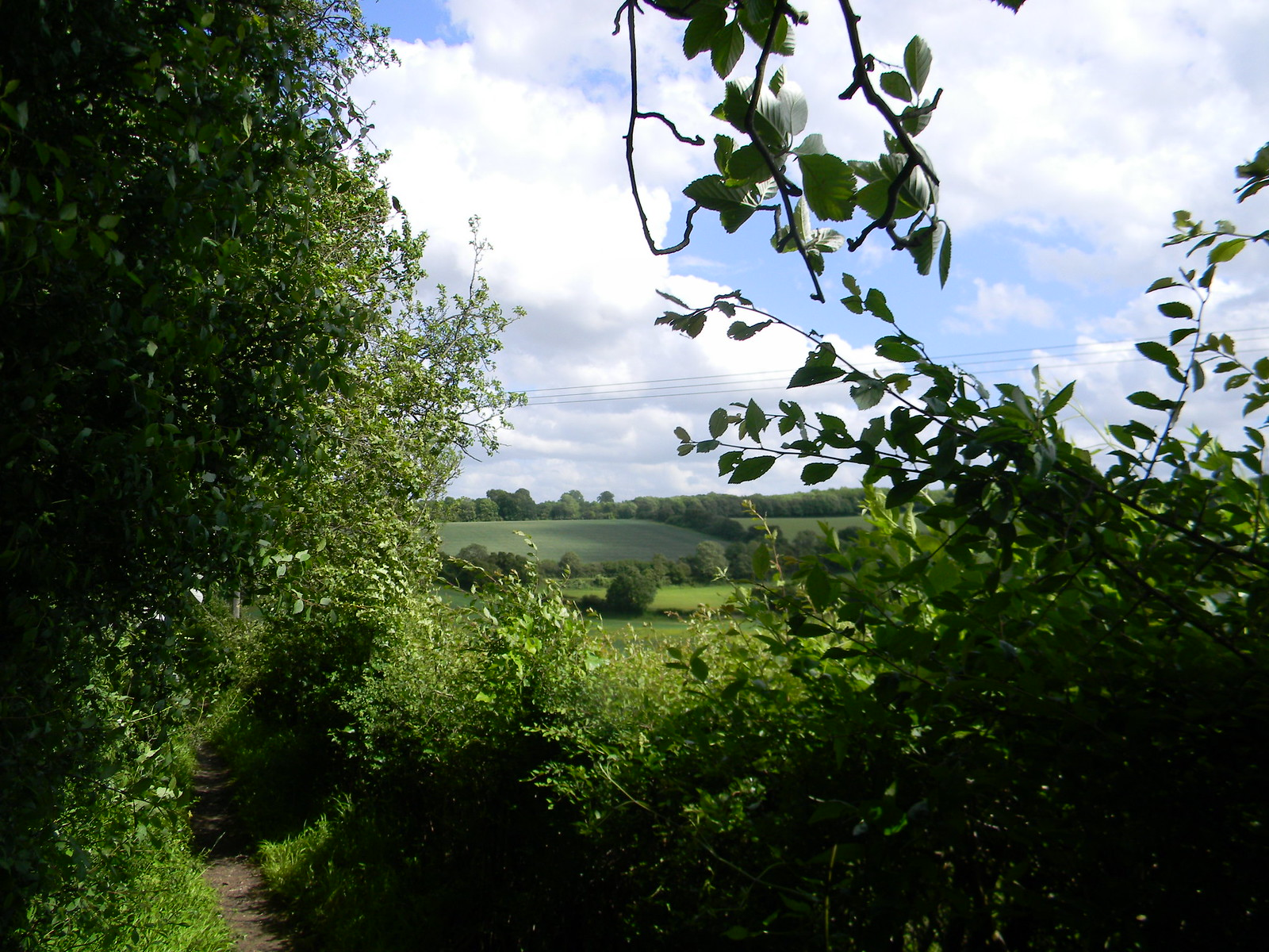 View over hedge Cuxton to Sole Street