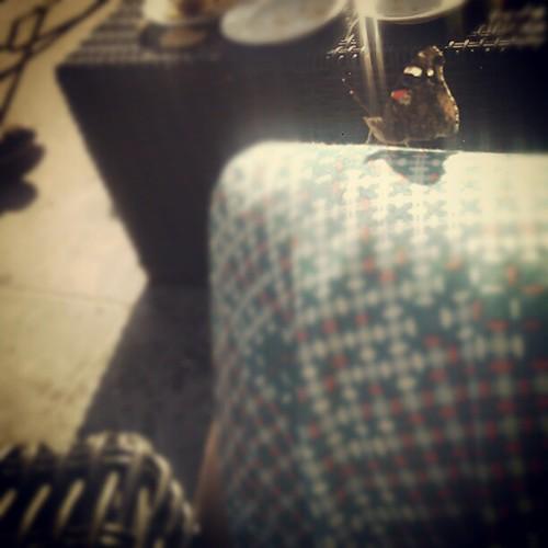 Naar het been is het wat zoeken vandaag maar er zat wel een vlinder op mijn knie #blotebenen