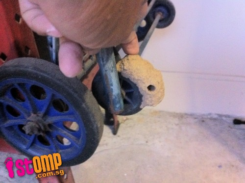 Yikes! Yishun home invaded by breeding wasps