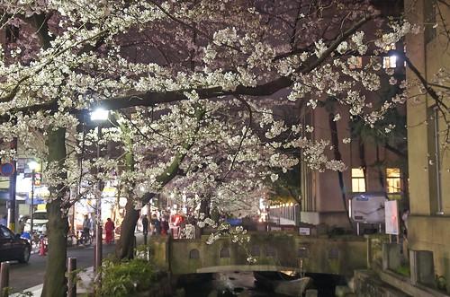 【写真】2014 桜 : 木屋町通/2021-09-17/IMGP5604