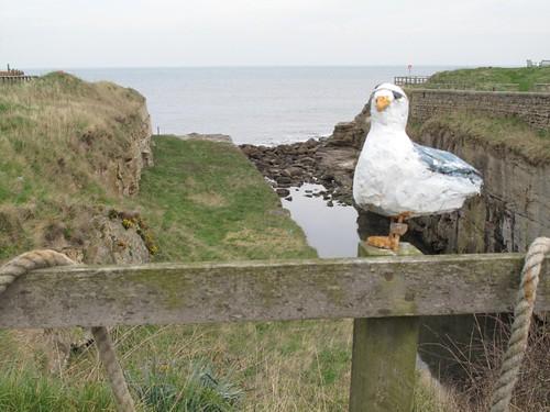 Peg-leg gull