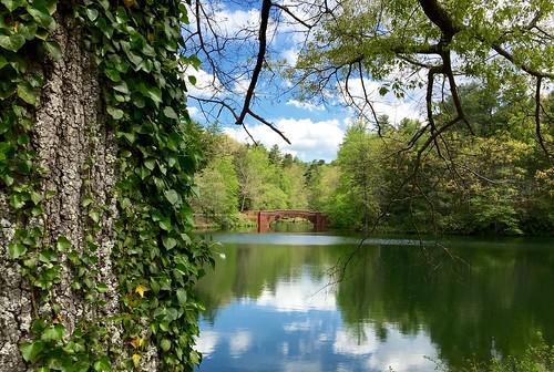 forest ivy northcarolina biltmore