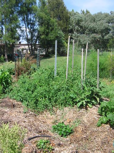 Tomato bed Jan 2012