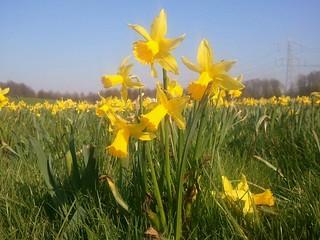 #seemyalmere #spring