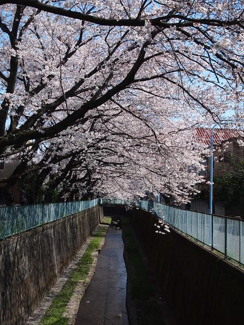 神田川 左岸歩道