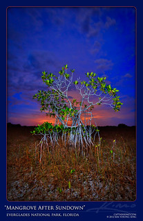 Mangrove After Sunset at Everglades National Park Florida