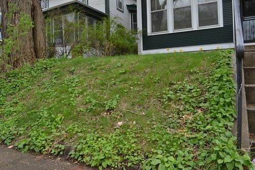 front yard garden potential