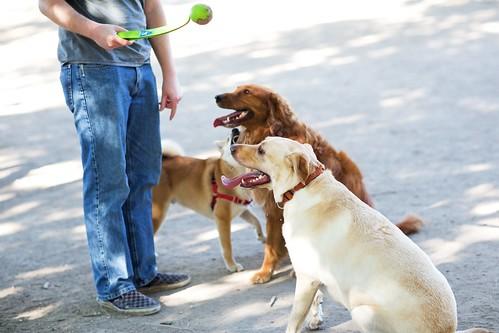 Dog Park 006