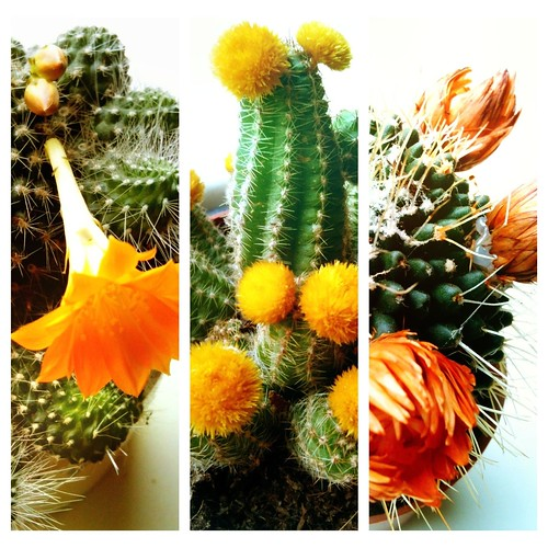Cheerful, prickly set of three