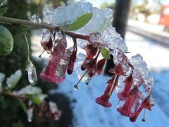 Icy fuschia