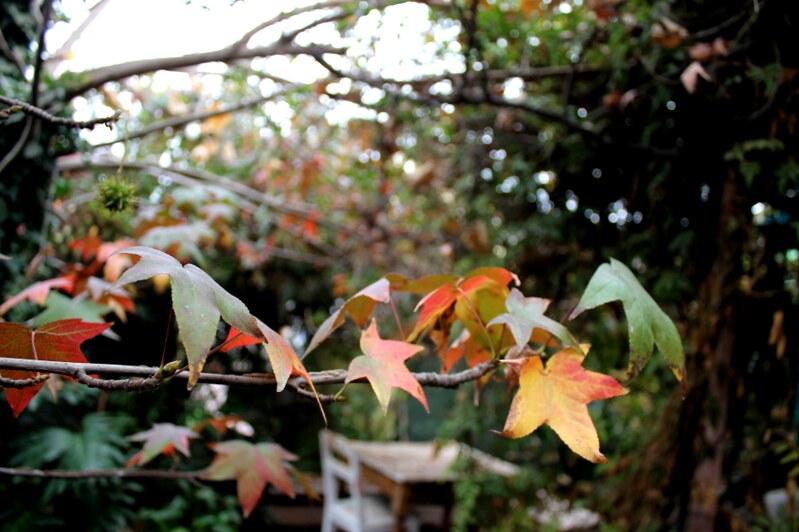 otoño en el pequeño jardín