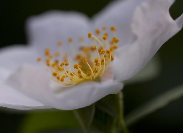 blossom center