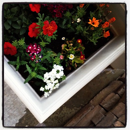 8 pm - watering my front porch planters. And thats a wrap on a picture an hour today! #10on10