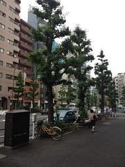 朝散歩 (2012/6/11)