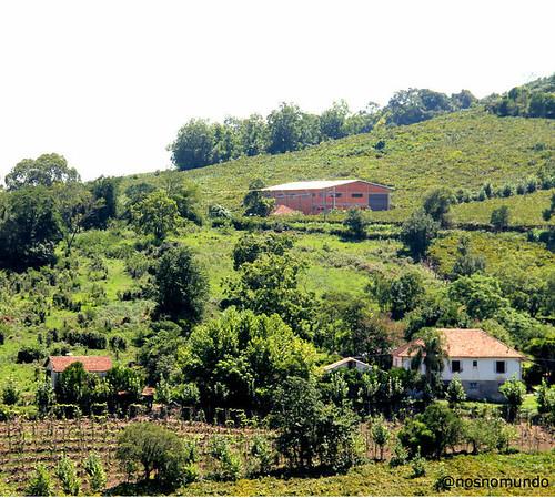 Pisa da Uva no Armazém das Cantinas Históricas