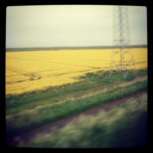 Grey yellow green