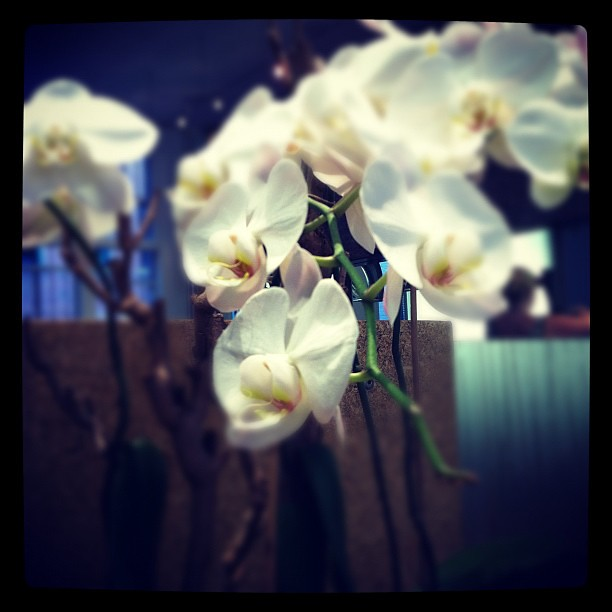 Orchids at James Joseph Salon