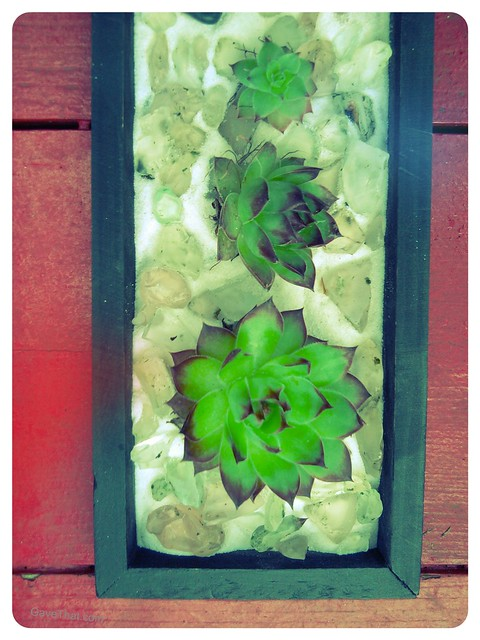 Hens and chicks in a black frame box with sea glass and sand