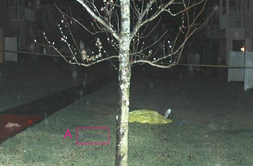 closer crop of Tree Body Bag from cut thru pic