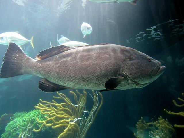 Bermuda Aquarium : Bermuda Aquarium Museum & Zoo Flickr - Photo Sharing!