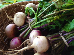 shallot(0.0), vegetable(1.0), turnip(1.0), produce(1.0), food(1.0), radish(1.0),