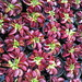 """Dionae - Venus Fly Trap """"Monster Traps ™"""" by Hungry Plants"""