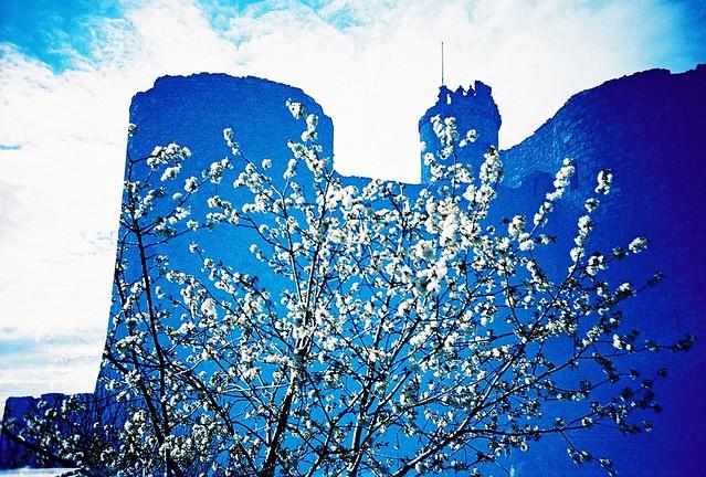 Flower power castle