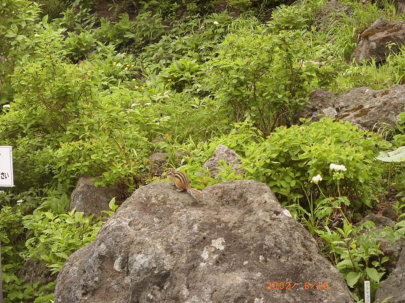 058黑岳松鼠