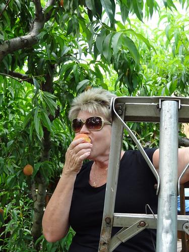 Peach Picking June 2012 (26)