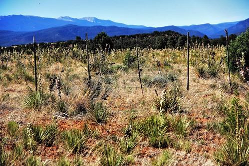 newmexico landscape yucca rowe santafebaldy lakepeak sangredecristomountainrange viewedfrom firedepartmentinrowe sundaydrivethroughnorthernnewmexico