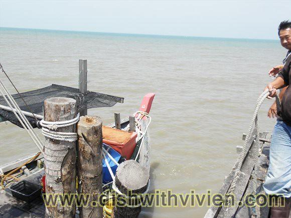 TanjungSepat15