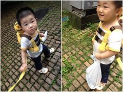 朝散歩とらちゃん (2012/6/17)
