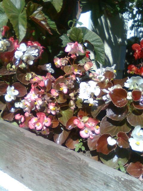 Ce plante putem creste in balcon ? - Pagina 3 7394308388_4e909704ca_z