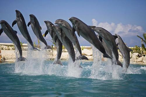 Dolphinaris 5