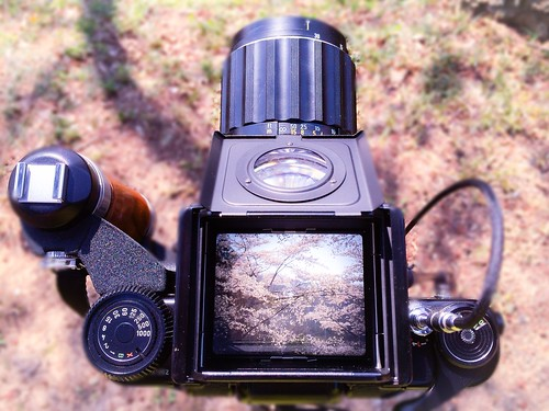 カメラロール-6718