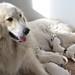 Miel a štěnda
