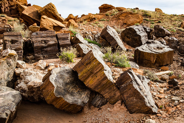 Petrified Forest NP, Jr.