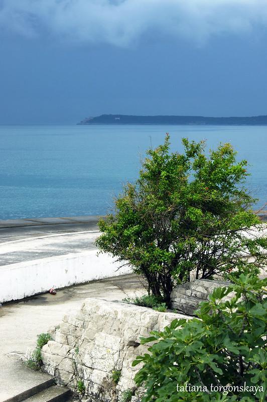 Дерево на пляже