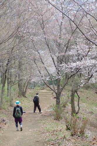 弘法山ハイキング#8