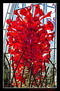 Chihuly's Red Tree