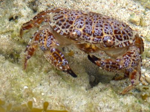 ocean sea beach water crab easttimor timorleste atauro