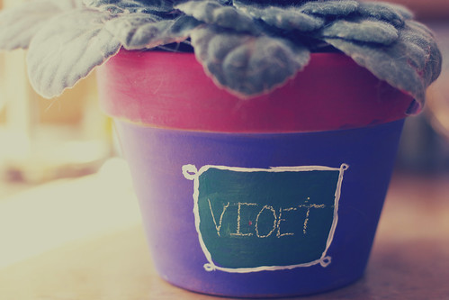 painted plant pot