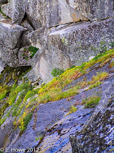 Edie's Image of the Day: Granite Garden