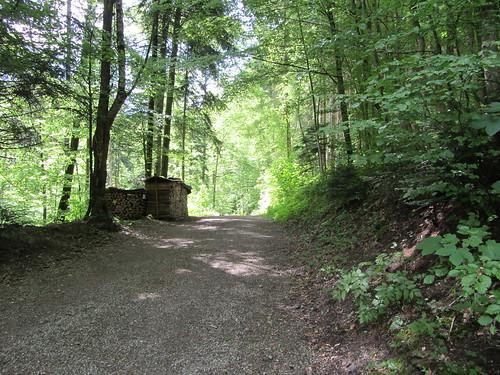 Wald Güntisberg