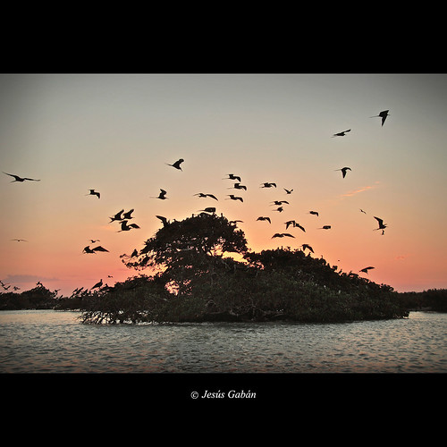 sunset naturaleza nature birds méxico atardecer aves puestadesol ocaso campeche ourtime lagunadetérminos coppercloudsilvernsun jesúsgabán mygearandme mygearandmepremium mygearandmebronze mygearandmesilver mygearandmegold mygearandmeplatinum mygearandmediamond bestofshining