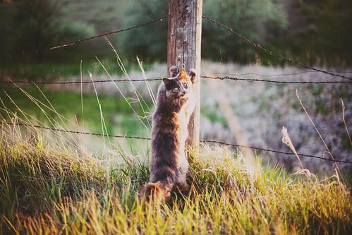 無料写真素材, 動物 , 猫・ネコ, 動物  立つ・立ち上がる
