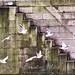 birdsinflightmed